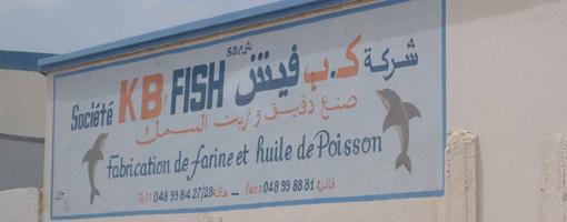 kb_fish1.jpg