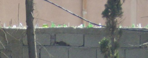 wall_marrakech_closeup_510.jpg